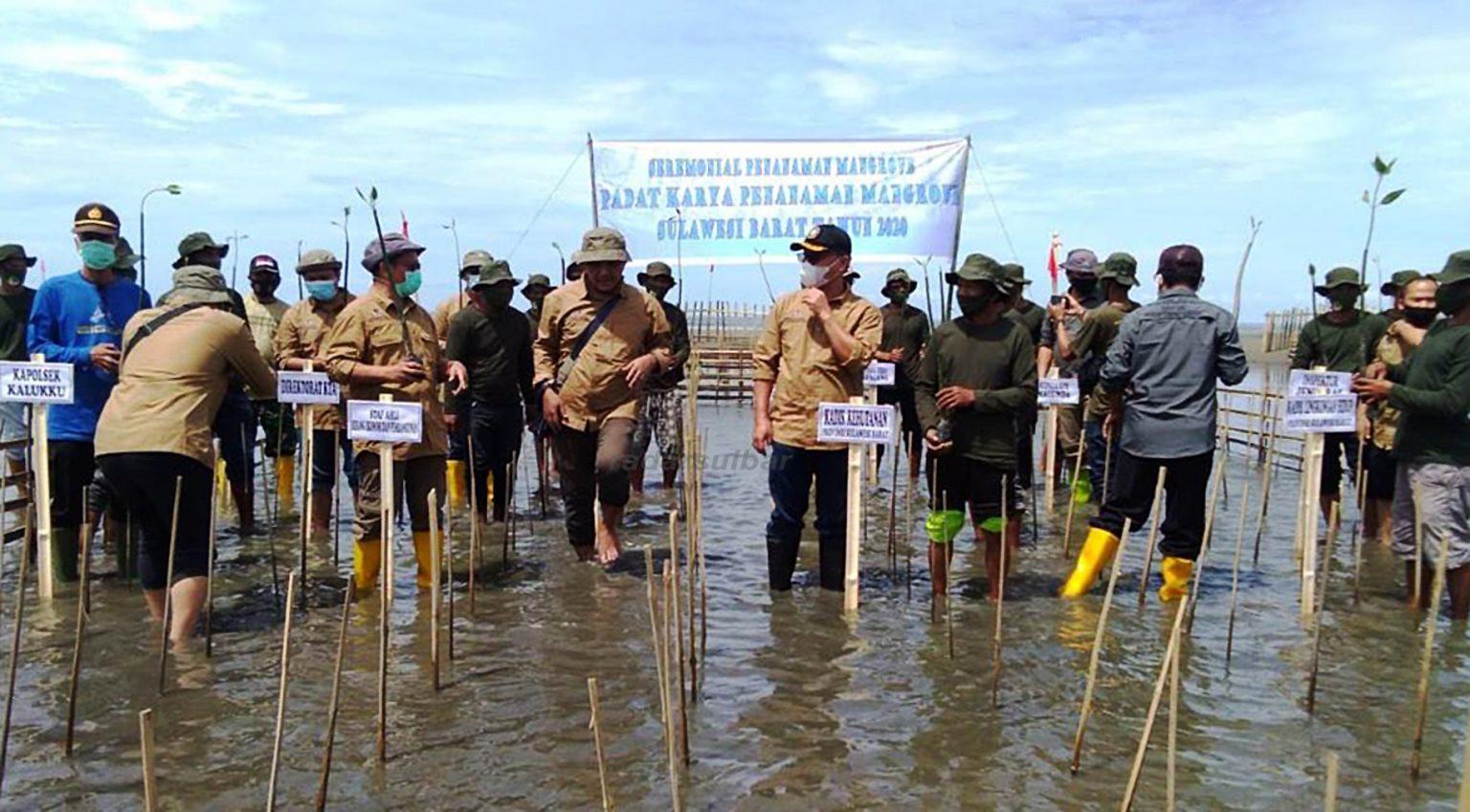 SEREMONIAL penanaman mangrove dalam rangka pemulihan ekonomi di pesisir Dusun Papalang Pantai, Desa Papalang, Kecamatan Papalang, Mamuju, Kamis 19 November 2020.